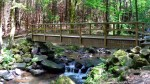 waldkirchen-saussbachklamm-wandergebiet-wandern-bruecke-1300